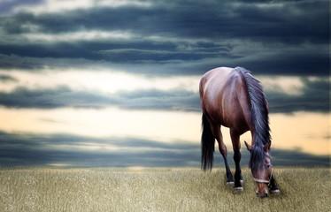 Horse grassing photo manipulation