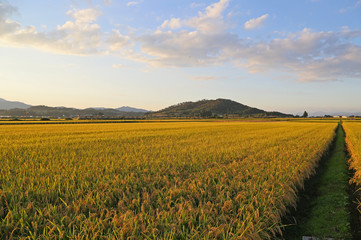秋の水田と奥羽本線