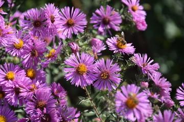 Природа (Цветы)