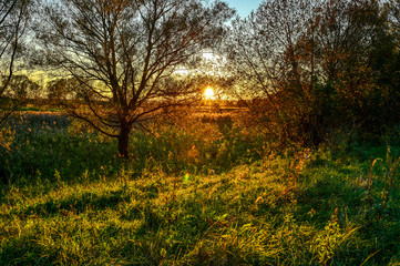 Autumn rays of the sun on the grass in the meadow at dawn