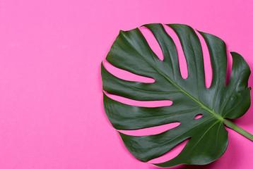 the monstera leaf