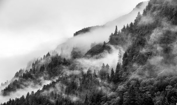 Mountains top with pine tree with fog in black and white