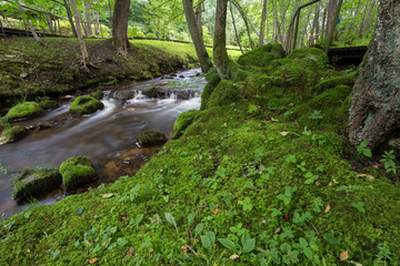 Green Park in Latvia