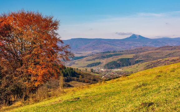 tree on hillside in mountainous autumn countryside