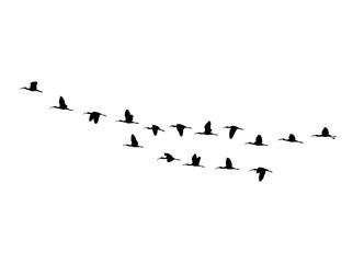 Glossy ibis (Plegadis falcinellus) wedge in flight. Vector silhouette a flock of birds