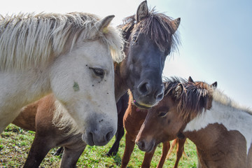 Horses in the meadow