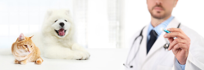 Veterinary doctor touch screen with pen dog and cat on white background. Vet clinic care concept