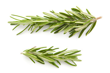 rosemary isolated on white