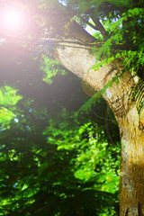 Sun Flare Behind Tree Branch