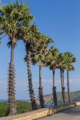 Green palm tree on blue sky background