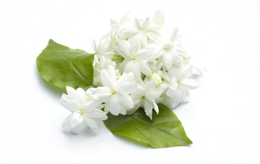 Jasmine flowers refreshing