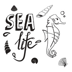 Sea life concept. Seahorse with shell hand drawn vector illustration