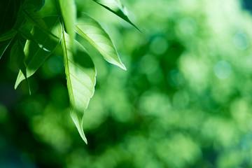 Foliage on defocused background