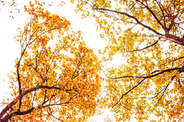 Photo of orange autumn forest with leaves
