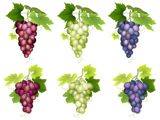 Set of realistic bunch of grapes of different colors and varieties. Vector illustration on white background isolated.