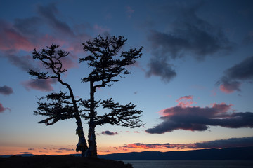 Summer evening landscape with a larch tree on the coast of Lake Baikal.