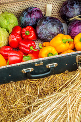 Vintage suitcase with fresh organic vegetables