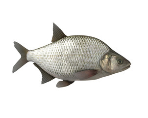 Bream.3D image isolated on the white background