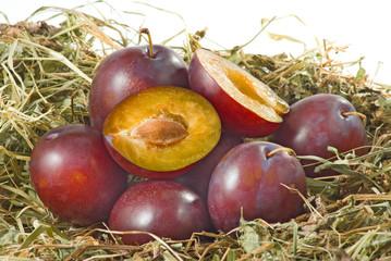 ripe plum close-up