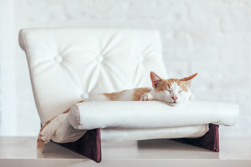 Wall Mural - Kitten sleeps on soft couch