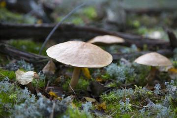 Mushroom Fototapete