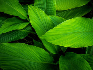 Green leaves, natural light
