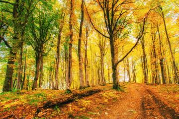 Golden morning sun rays on green grass in autumn. Beautiful nature background