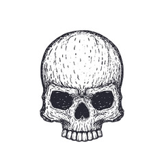 Human skull on white, hand drawn vector illustration