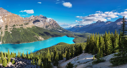 Panoramic view of turquoise Lake Peyto with surrounding snow-covered mountains and forest in the valley during sunny summer day, Banff National Park, Canadian Rockies, Canada.