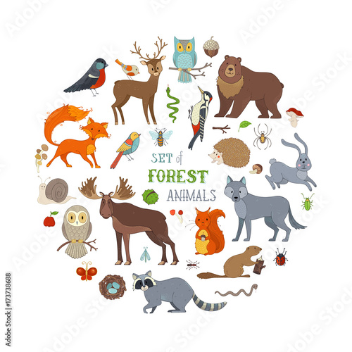 Vector set of forest animals isolated on white background.