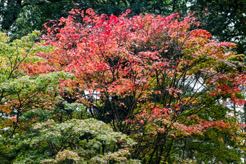 Trees displaying Autumn Colours