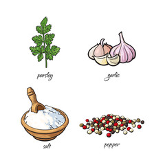 vector flat cartoon sketch hand drawn Spices, seasoning, flavorings and kitchen herbs set. Parsley leaves with stem, black pepper, garlic and white salt. Isolated illustration on a white background