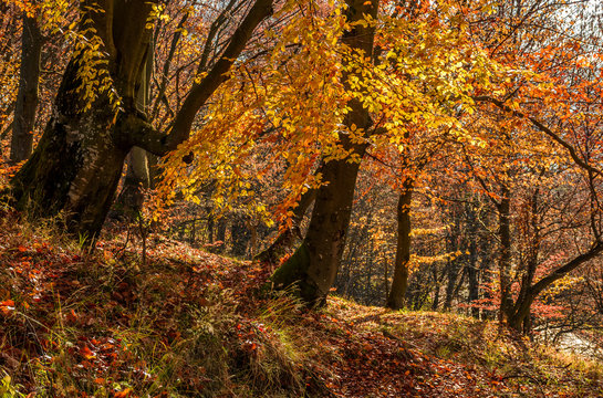 forest in golden brown foliage on sunny day