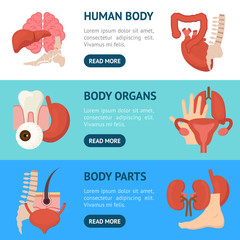 Cartoon Human Internal Organs Banner Horizontal Set. Vector