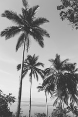 Black and white photo of palms