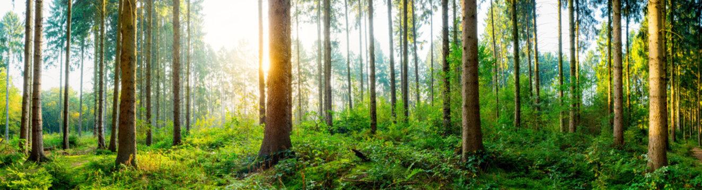 Beautiful sunrise in autumn forest