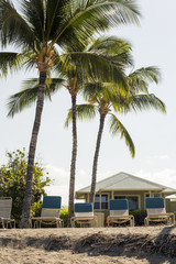 Hawaii Scene