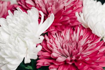 Closeup of bouquet of mum flowers
