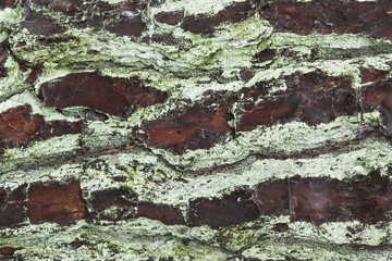 Natural background, close-up of tree bark