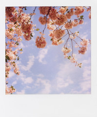 Of Pink Cherry Blossoms Against A Blue Sky