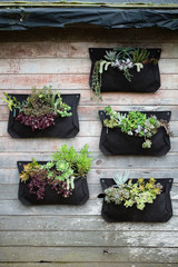 Garden shed wall with vertical planted succulents