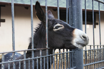 sad donkey in the cage