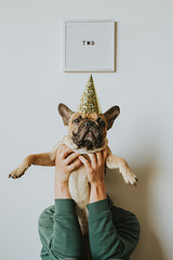 Second Birthday - Letters Spell Two and French Bulldog Puppy in a Party Hat