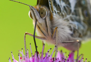 loseup butterfly on flower, butterfly on flower with blurry background, butterfly on flower in garden or in nature