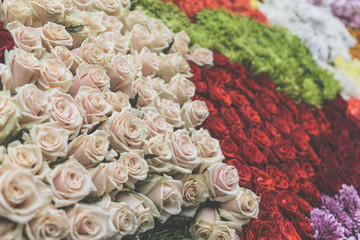Natural roses background, selective focus