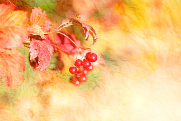 Photo of a macro with a large viburnum