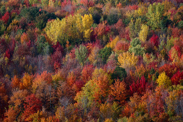 colorful forest in the fall season in quebec