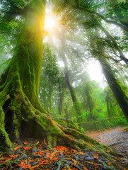 Tropical rain forest with sunlight, travel and destination