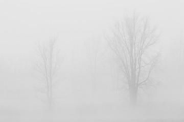 Fototapeta trees in the fog, black and white