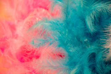 Beautiful bird feathers for decorative aims